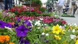 18Temps de Flors