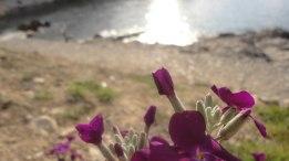 LL_flowers