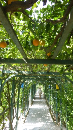 A tunnel of oranges