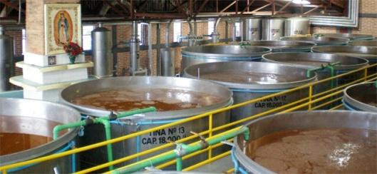 tequila-distillery