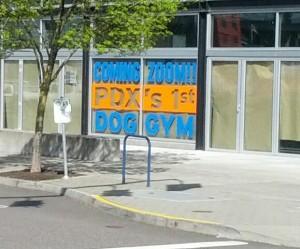 A dog gym? Really?