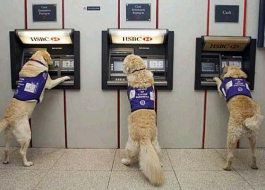 ATM dogs